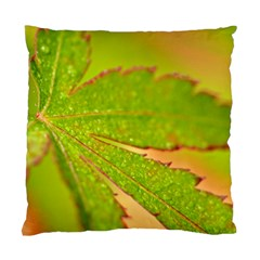Leaf Cushion Case (two Sided)  by Siebenhuehner