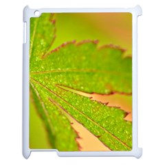 Leaf Apple Ipad 2 Case (white) by Siebenhuehner
