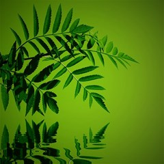 Leaf Canvas 12  X 12  (unframed) by Siebenhuehner