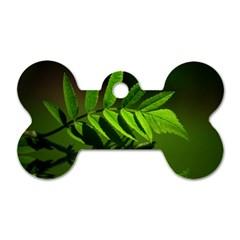 Leaf Dog Tag Bone (two Sided) by Siebenhuehner