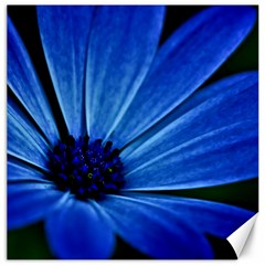 Flower Canvas 12  X 12  (unframed) by Siebenhuehner