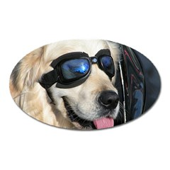 Cool Dog  Magnet (oval) by Siebenhuehner