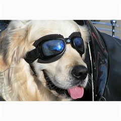 Cool Dog  Canvas 12  X 18  (unframed) by Siebenhuehner