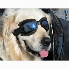 Cool Dog  Canvas 18  X 24  (unframed) by Siebenhuehner