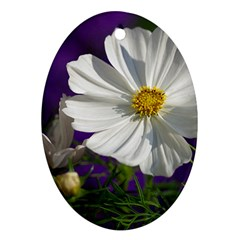 Cosmea   Oval Ornament by Siebenhuehner