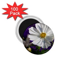 Cosmea   1 75  Button Magnet (100 Pack) by Siebenhuehner