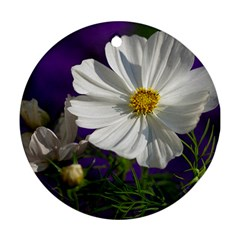 Cosmea   Round Ornament (two Sides) by Siebenhuehner