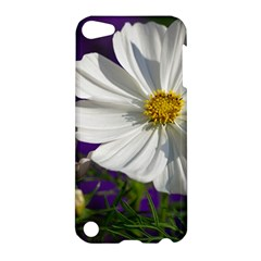 Cosmea   Apple Ipod Touch 5 Hardshell Case by Siebenhuehner