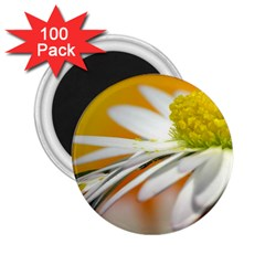 Daisy With Drops 2 25  Button Magnet (100 Pack) by Siebenhuehner