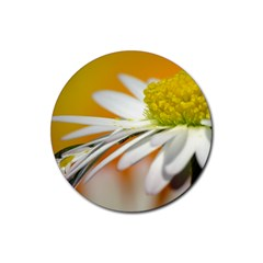 Daisy With Drops Drink Coaster (round) by Siebenhuehner