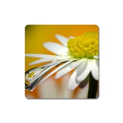 Daisy With Drops Magnet (square) by Siebenhuehner