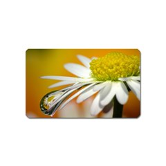 Daisy With Drops Magnet (name Card) by Siebenhuehner
