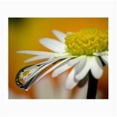 Daisy With Drops Glasses Cloth (small) by Siebenhuehner