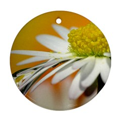 Daisy With Drops Round Ornament (two Sides) by Siebenhuehner