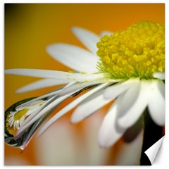 Daisy With Drops Canvas 12  X 12  (unframed) by Siebenhuehner