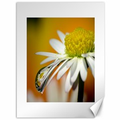 Daisy With Drops Canvas 36  X 48  (unframed) by Siebenhuehner