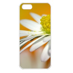 Daisy With Drops Apple Iphone 5 Seamless Case (white) by Siebenhuehner