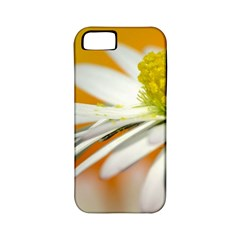 Daisy With Drops Apple Iphone 5 Classic Hardshell Case (pc+silicone) by Siebenhuehner