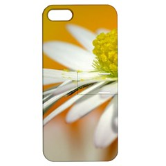 Daisy With Drops Apple Iphone 5 Hardshell Case With Stand by Siebenhuehner