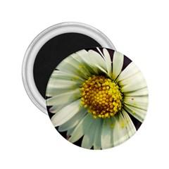 Daisy 2 25  Button Magnet by Siebenhuehner
