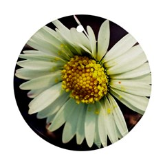 Daisy Round Ornament by Siebenhuehner