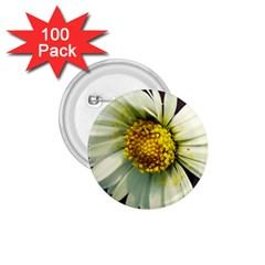 Daisy 1 75  Button (100 Pack) by Siebenhuehner