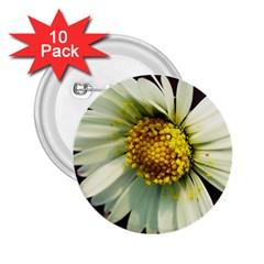 Daisy 2 25  Button (10 Pack) by Siebenhuehner