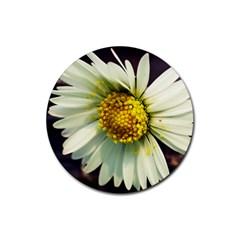 Daisy Drink Coaster (round) by Siebenhuehner
