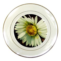 Daisy Porcelain Display Plate by Siebenhuehner