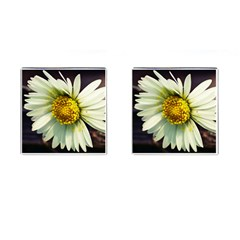 Daisy Cufflinks (square) by Siebenhuehner