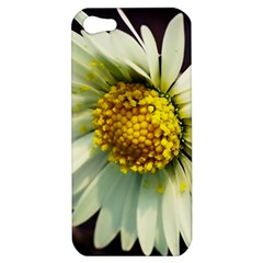Daisy Apple Iphone 5 Hardshell Case by Siebenhuehner