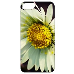 Daisy Apple Iphone 5 Classic Hardshell Case by Siebenhuehner