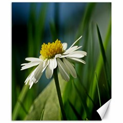 Daisy Canvas 8  X 10  (unframed) by Siebenhuehner