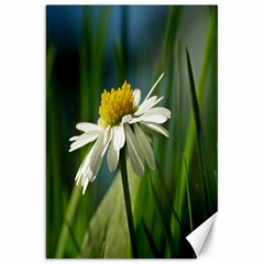Daisy Canvas 20  X 30  (unframed) by Siebenhuehner