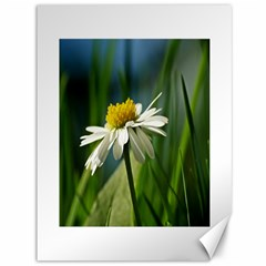 Daisy Canvas 36  X 48  (unframed) by Siebenhuehner