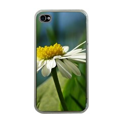 Daisy Apple Iphone 4 Case (clear) by Siebenhuehner