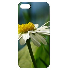 Daisy Apple Iphone 5 Hardshell Case With Stand by Siebenhuehner