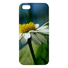 Daisy Iphone 5 Premium Hardshell Case by Siebenhuehner