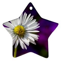 Daisy Star Ornament by Siebenhuehner