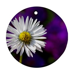 Daisy Round Ornament (two Sides) by Siebenhuehner