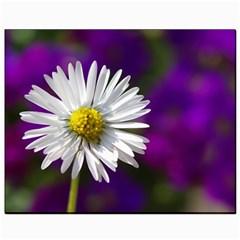 Daisy Canvas 8  X 10  (unframed) by Siebenhuehner
