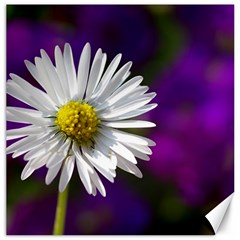 Daisy Canvas 12  X 12  (unframed) by Siebenhuehner