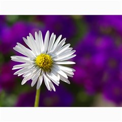 Daisy Canvas 12  X 16  (unframed) by Siebenhuehner