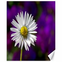 Daisy Canvas 11  X 14  (unframed)
