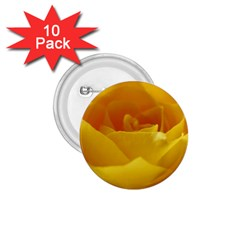 Yellow Rose 1 75  Button (10 Pack) by Siebenhuehner