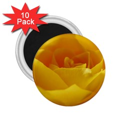 Yellow Rose 2 25  Button Magnet (10 Pack) by Siebenhuehner