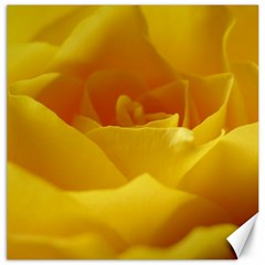 Yellow Rose Canvas 16  X 16  (unframed) by Siebenhuehner