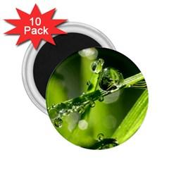 Waterdrops 2 25  Button Magnet (10 Pack) by Siebenhuehner