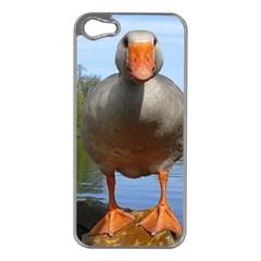 Geese Apple Iphone 5 Case (silver) by Siebenhuehner