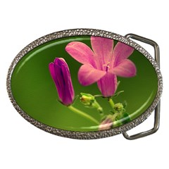 Campanula Close Up Belt Buckle (oval)